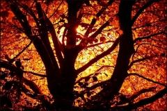 autumn_fire