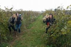 massbach-vines