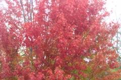 trees-02